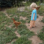 Cambria loves playing with the chickens. We often find her carrying them around while she sings.